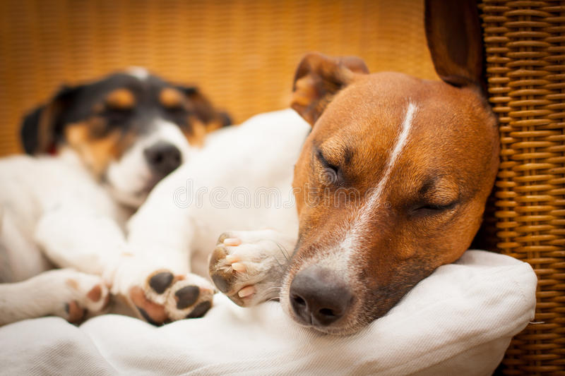 Couple of two dogs in love stock image
