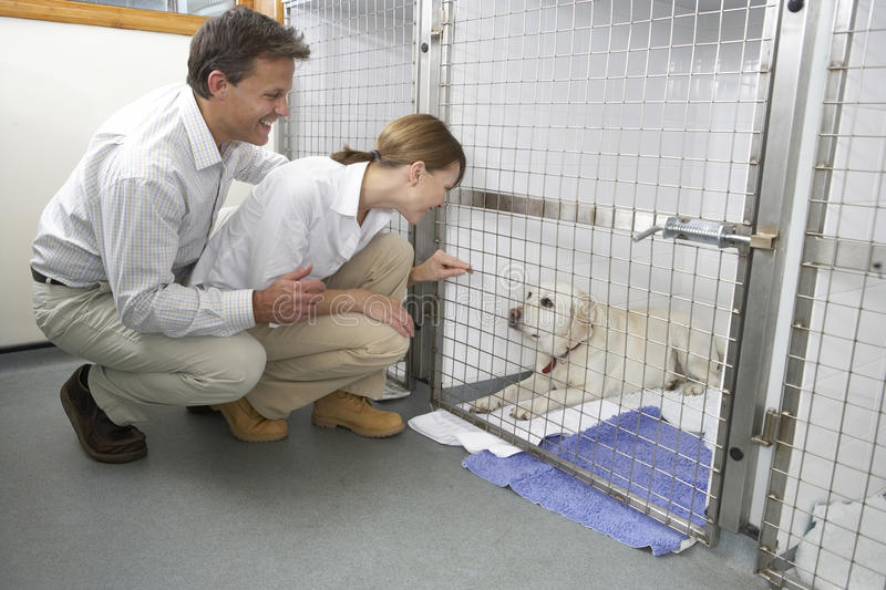 Download Couple Visiting Pet Dog stock image. Image of visiting - 9388709