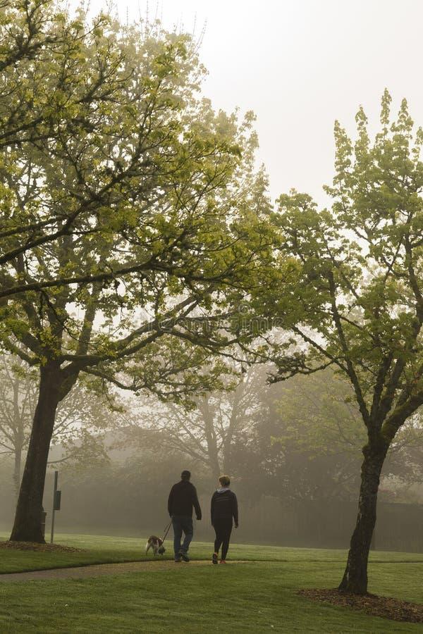 Couple walking dog through foggy park royalty free stock image