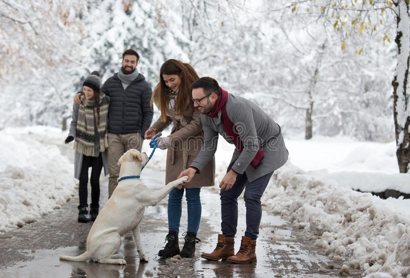Couple walking dog in park on snow stock images