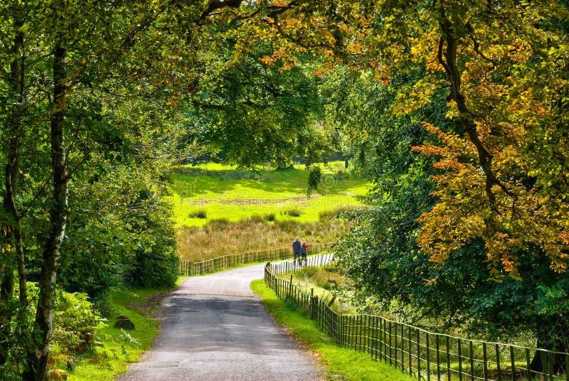 A couple walking through early Auumn woodland royalty free stock photo