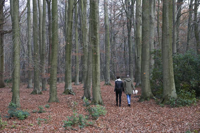 Couple walking in a forest stock images