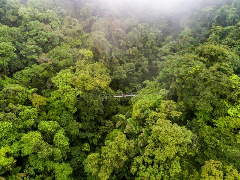 Couple walking over mystico hanging bridges at La Fortuna rainforest aerial drone view in Costa Rica jungle stock photography