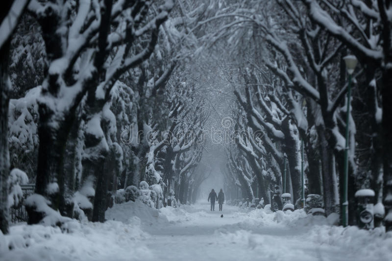 Couple walking in the park, winter time. Couple walking on a white alley in the park, all covered with snow royalty free stock images
