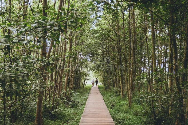 A couple walking a wooden path in the forest royalty free stock images