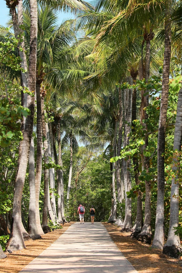 Couple walks a straight path between tall palms stock image