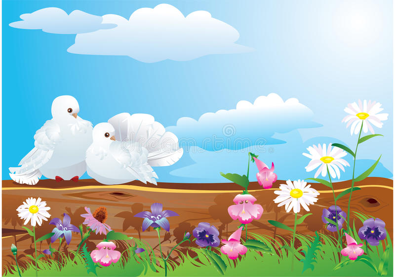 Couple Of White Pigeons Royalty Free Stock Image