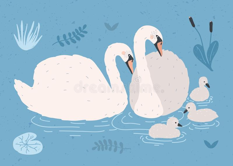 Couple of white swans and brood of cygnets floating together in pond or lake among plants. Adorable family of wild birds vector illustration