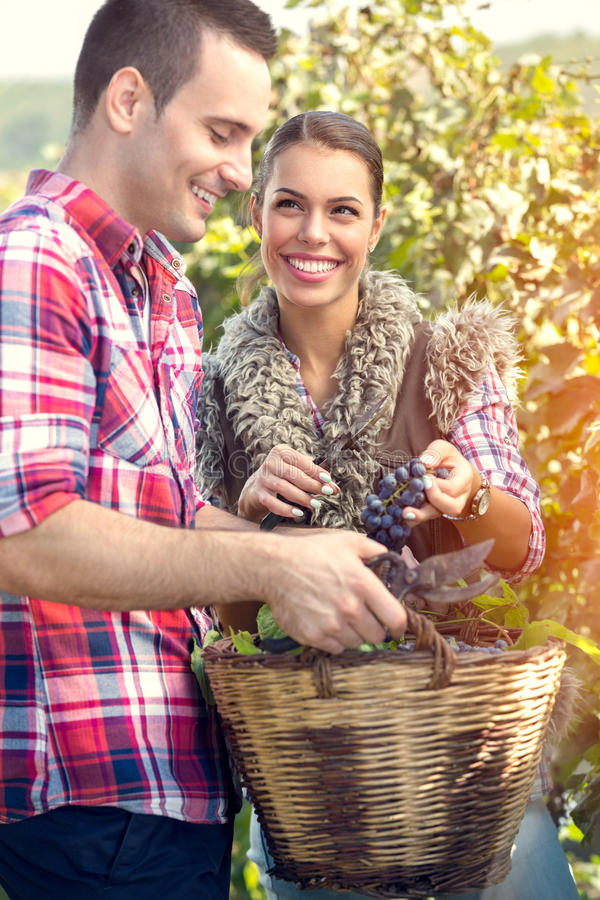 Couple working in vineyard. Young couple working in vineyard royalty free stock image