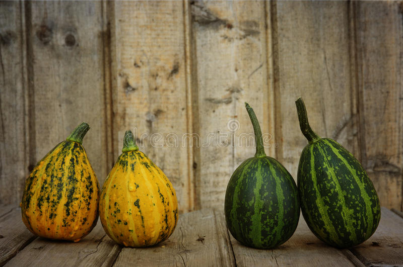 Download Couples stock image. Image of orange, colored, ripe, nature - 21358863