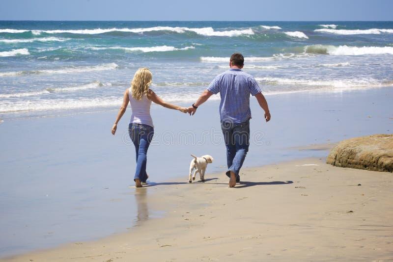 Couples attrayants marchant à la plage avec leur chiot image stock