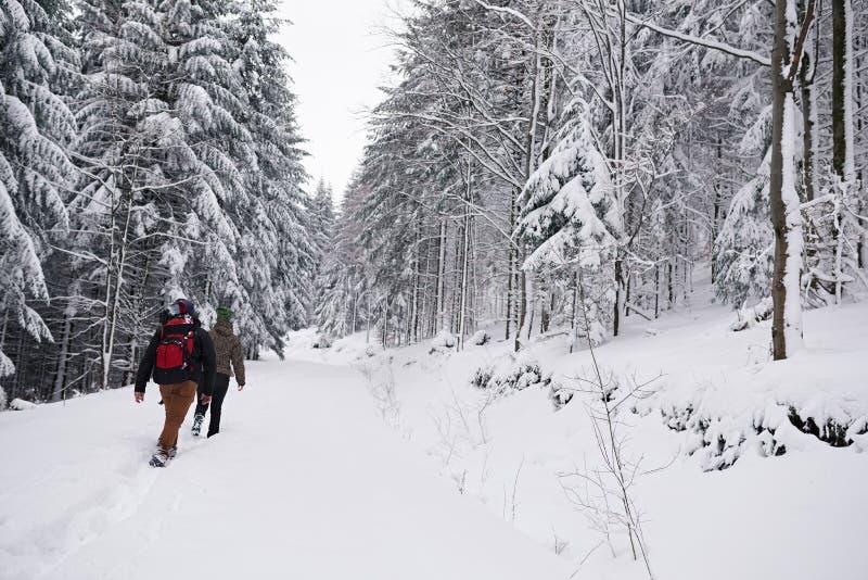 Couples augmentant le long d'une traînée de forêt couverte par neige en hiver photos stock