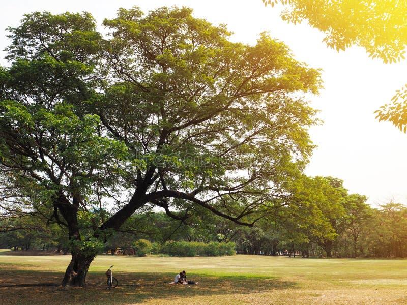 Couples ayant le pique-nique sous le grand arbre images stock