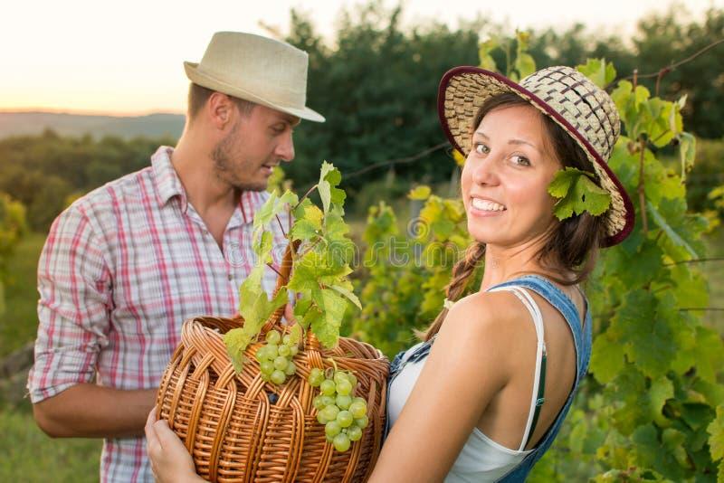 Couples dans la cueillette de raisin au vignoble avec un panier photo libre de droits