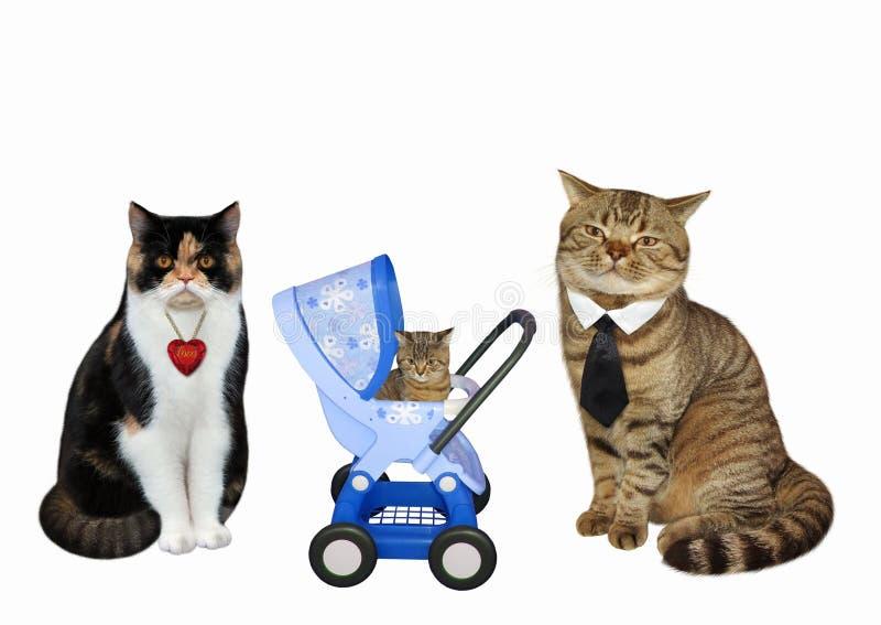 Couples de chat et leur chaton images libres de droits
