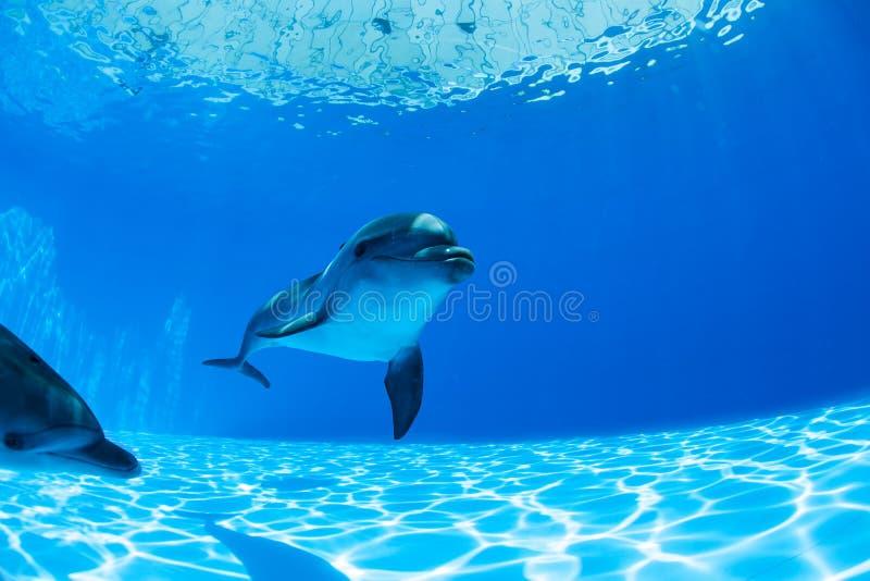 Couples de dauphins image libre de droits