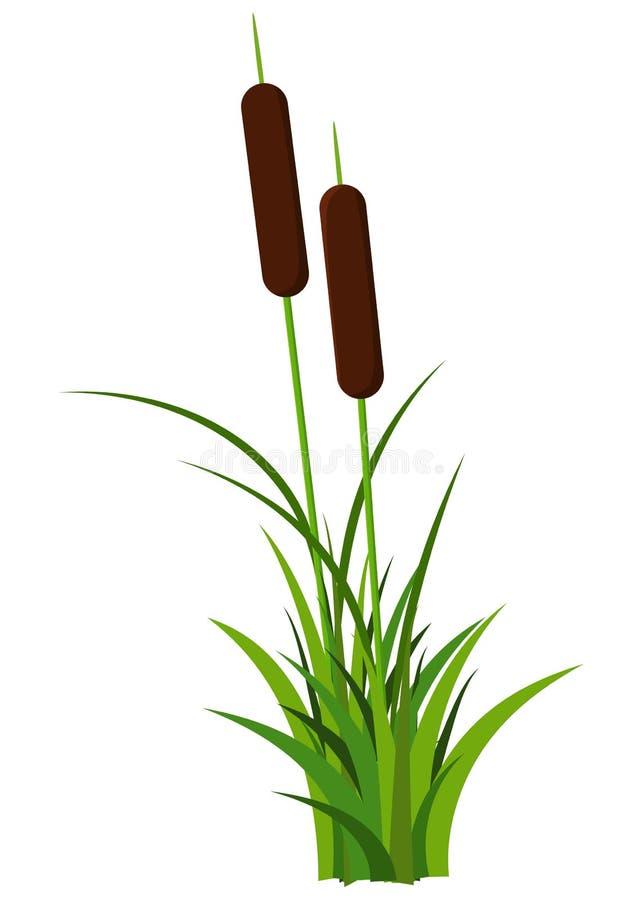 Couples de la tige tubulaire avec le vecteur d'usine de feuilles d'isolement sur le fond blanc illustration libre de droits
