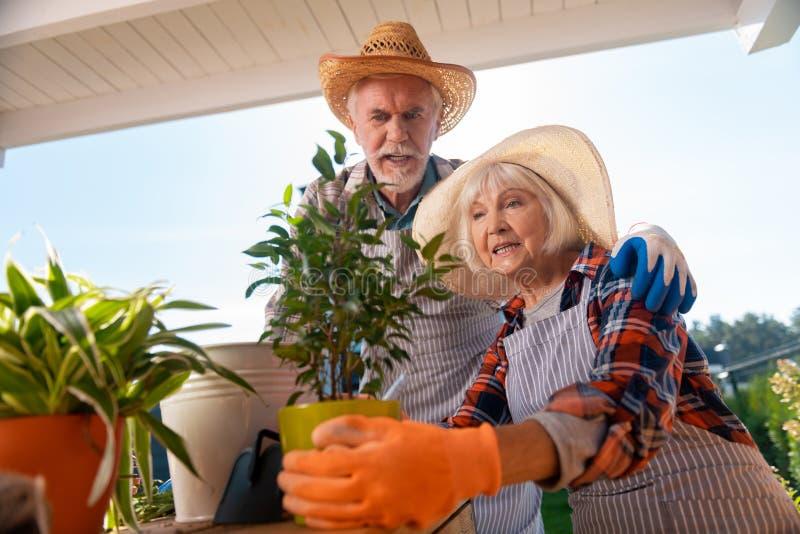 Couples de mari plus âgé et d'épouse passant le temps faisant ensemble le jardinage photographie stock