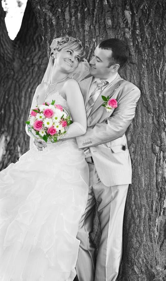 Couples de mariage sur le fond d'un joncteur réseau d'arbre photos libres de droits