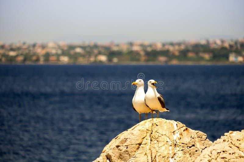 Couples de mouette sur des pierres contre la mer photographie stock