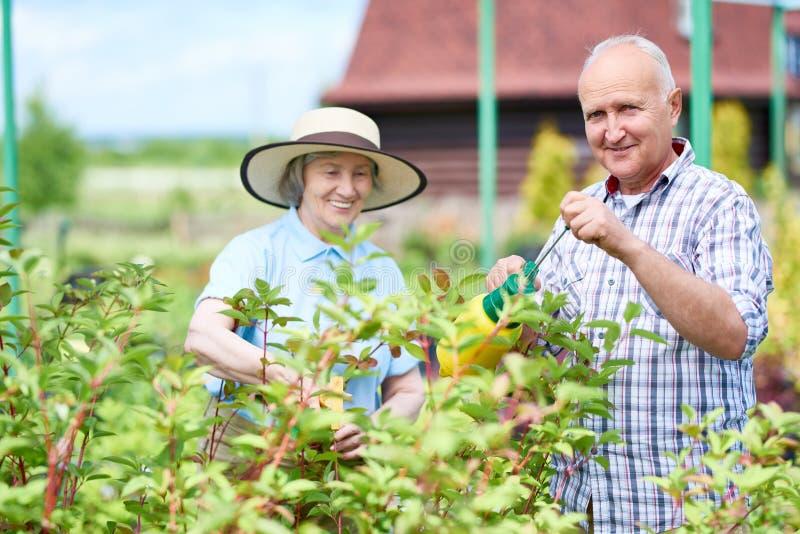 Couples des aînés dans le jardin photo libre de droits