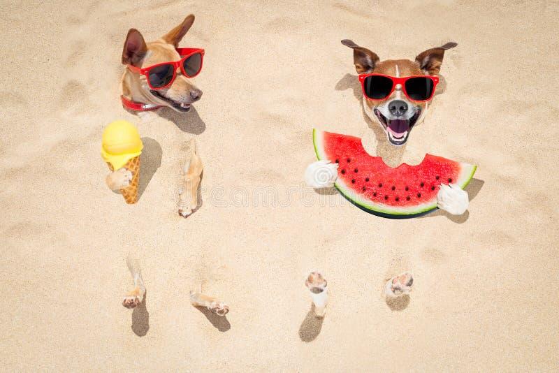 Couples des chiens à la plage et à la pastèque photographie stock