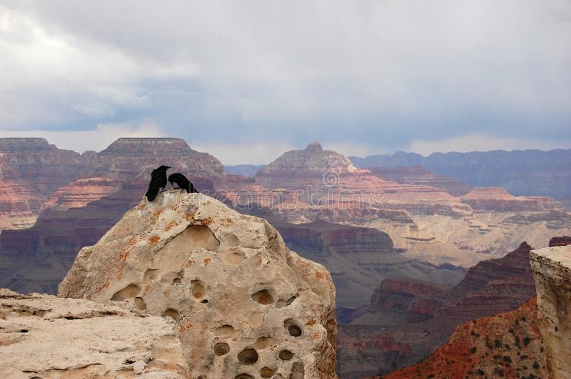 Couples des condors en canyon grand photos libres de droits