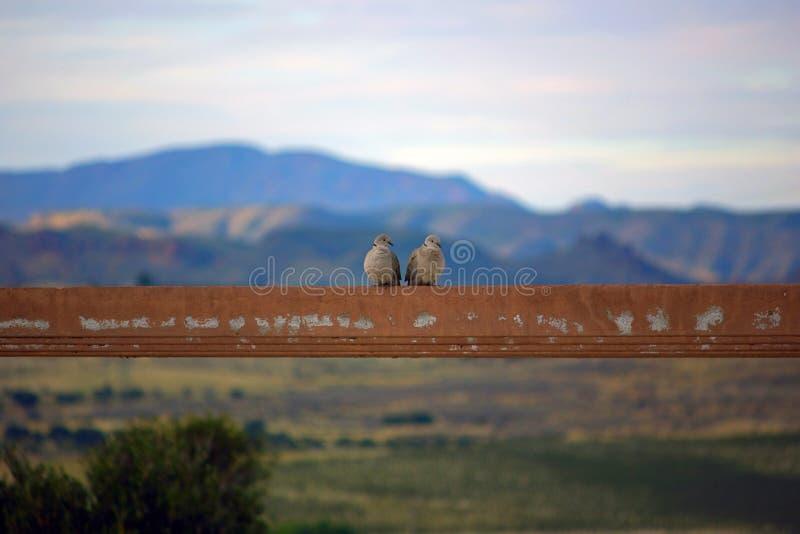 Couples des oiseaux photo libre de droits