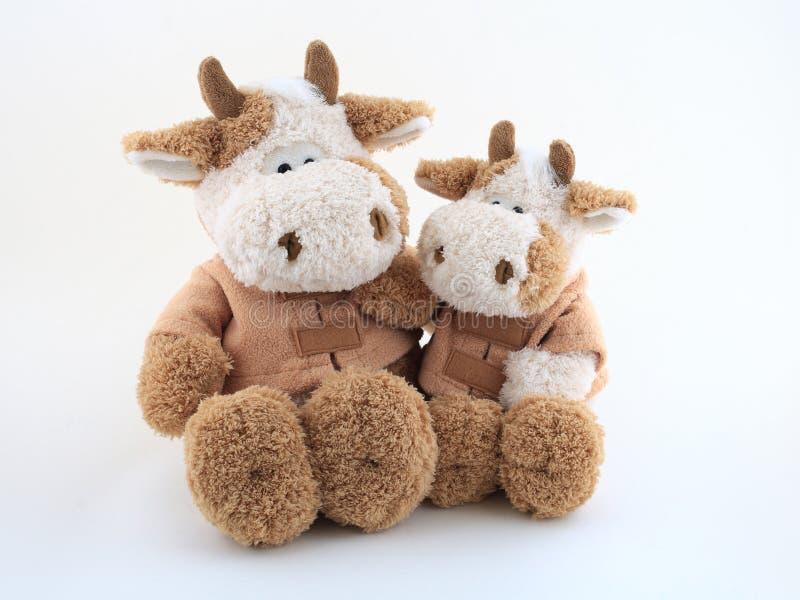 Couples des vaches drôles images stock