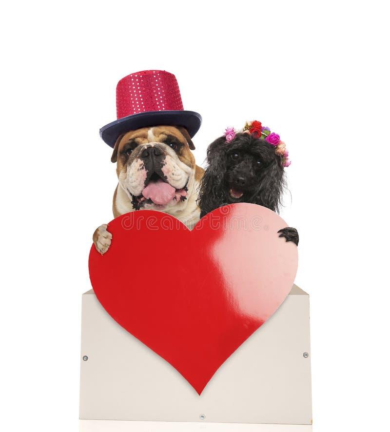 Couples heureux de chien tenant un grand coeur rouge image stock