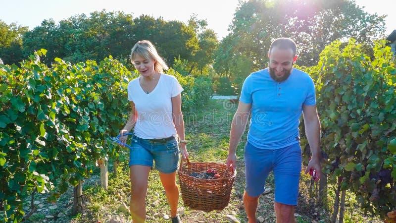 Couples heureux des agriculteurs portant un panier de raisin au vignoble images stock