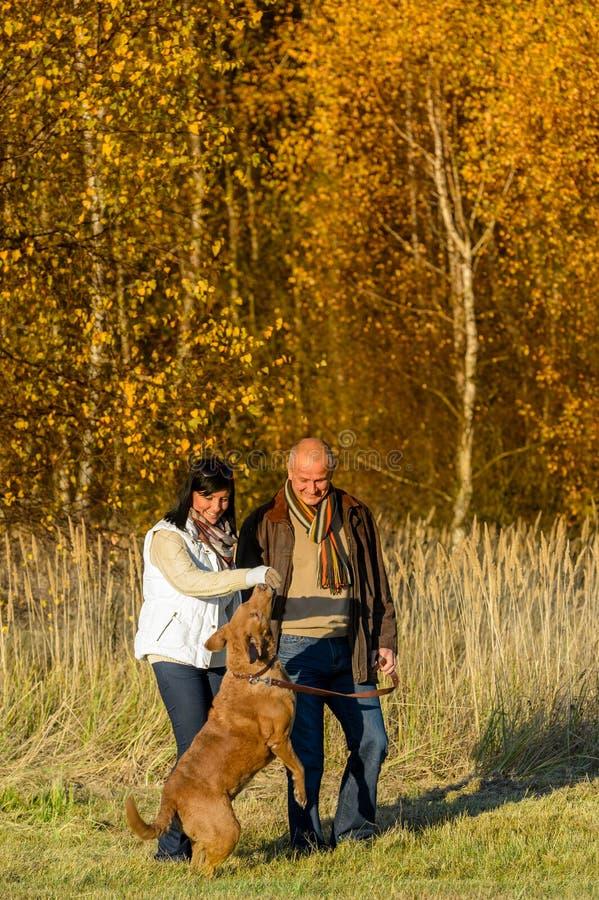 Couples jouant avec le parc de coucher du soleil d'automne de chien images stock