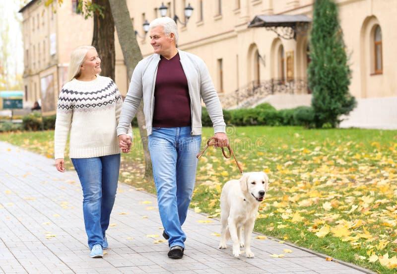 Couples mûrs marchant leur chien photographie stock libre de droits