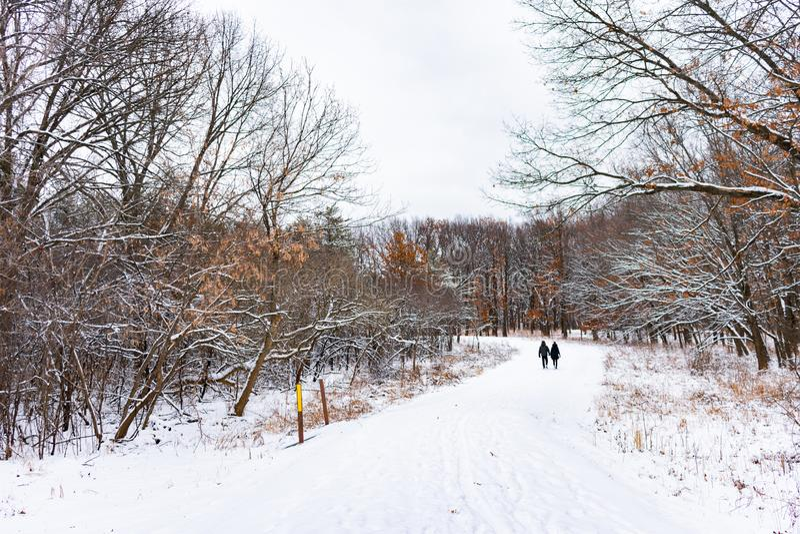Couples marchant sur une traînée couverte par neige dans une forêt du Mid-West image stock