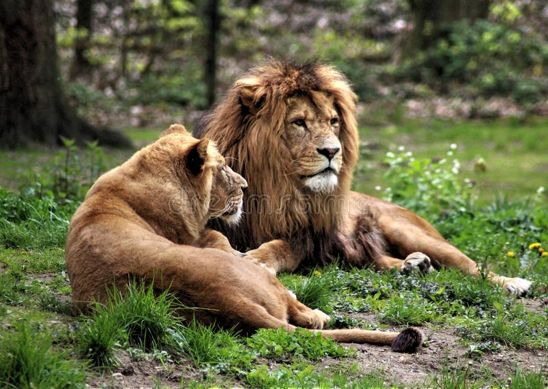 Couples masculins africains photos stock