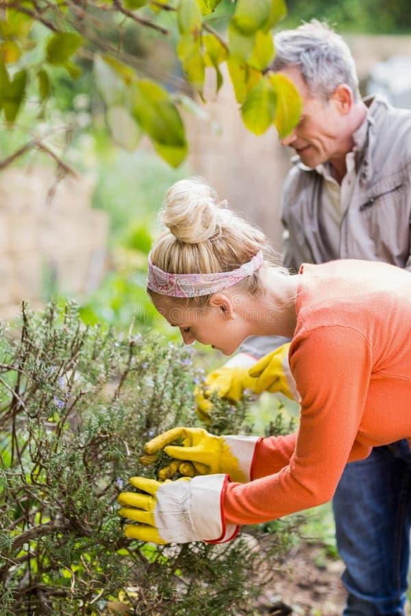 Couples mignons sélectionnant les herbes aromatiques photo stock