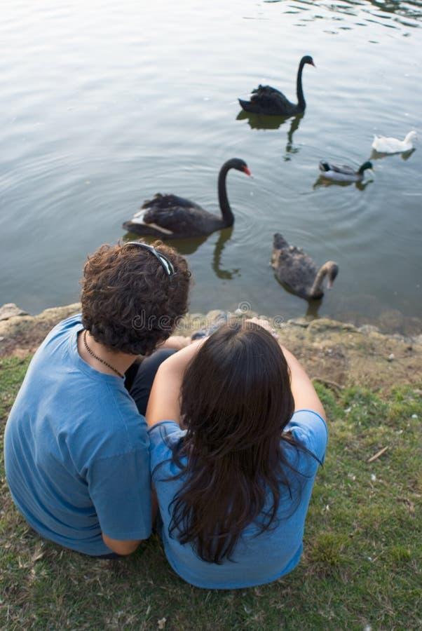 Couples par les cygnes de observation d'un étang - verticale photographie stock libre de droits