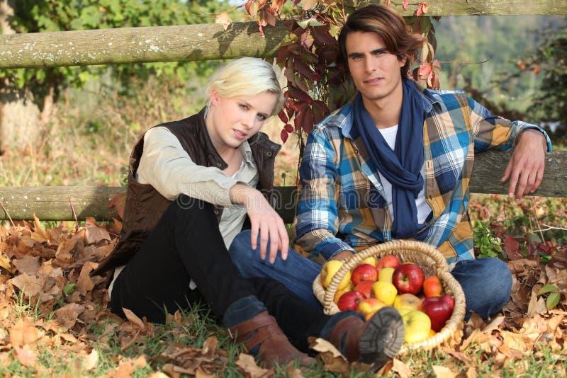Couples recueillant des pommes photos stock