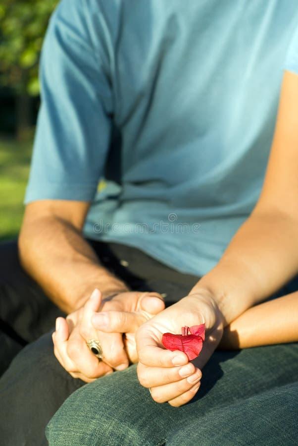 Couples retenant une fleur rouge - hauts proches - photo stock