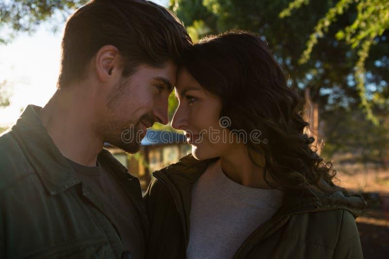 Couples romantiques regardant l'un l'autre photographie stock libre de droits