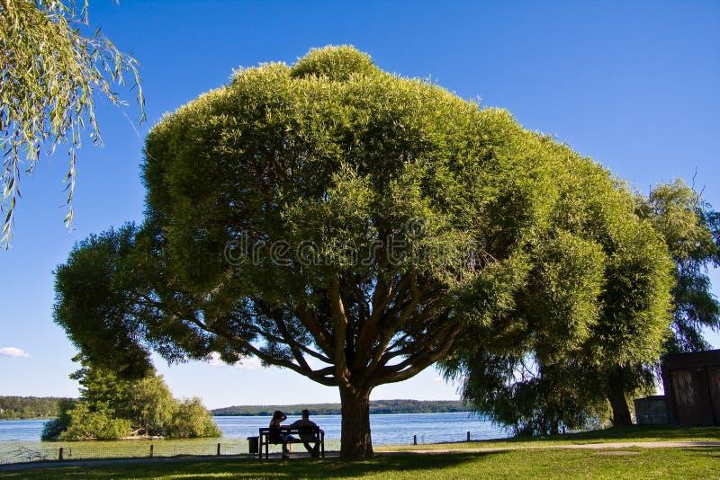 Couples sous le grand arbre image stock