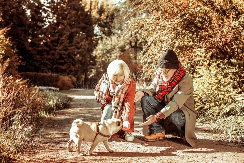Couples supérieurs heureux marchant leur chien ensemble image stock