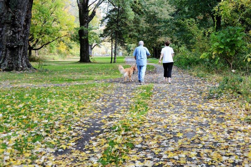 Couples supérieurs marchant avec leur chien en parc image libre de droits