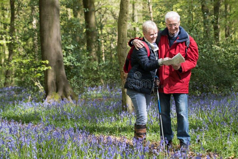 Couples supérieurs sur la promenade par le bois de jacinthe des bois regardant la carte image libre de droits