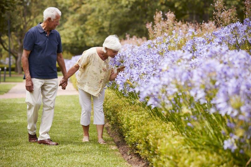 Couples supérieurs tenant les fleurs sentantes sur la promenade en parc ensemble photographie stock