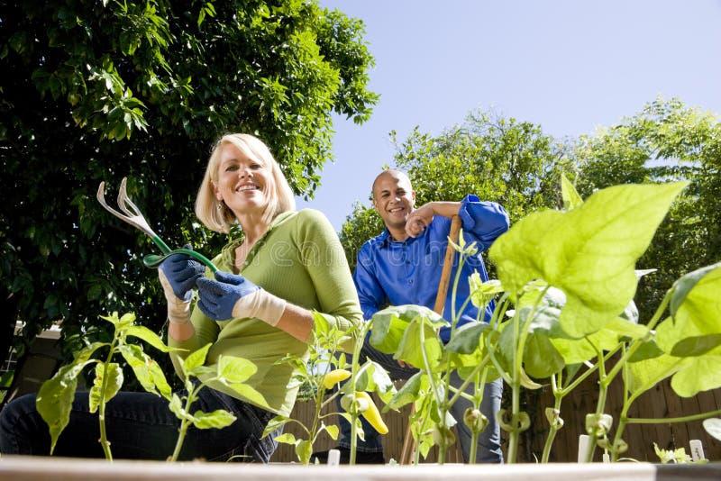 Couples travaillant au potager dans l'arrière-cour image libre de droits