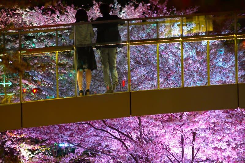 Couplez donner sur le cerisier du haut du pont image stock
