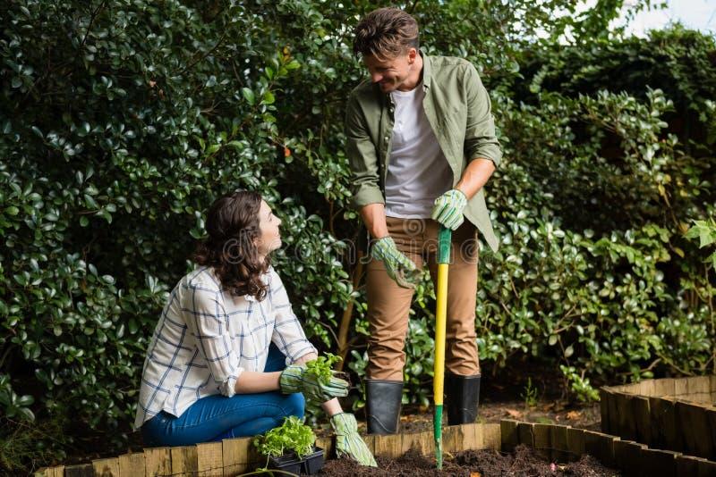 Couplez l'interaction les uns avec les autres tout en faisant du jardinage dans le jardin image libre de droits
