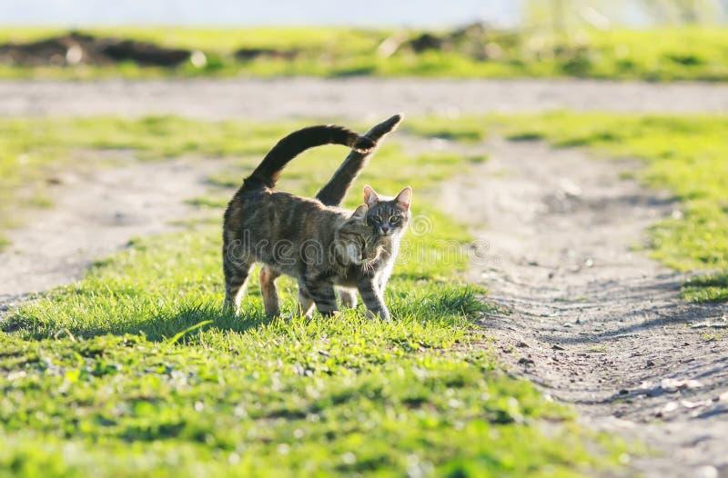 Couplez le bras de marche de chaton drôle mignon dans le bras au vert juteux g photos stock