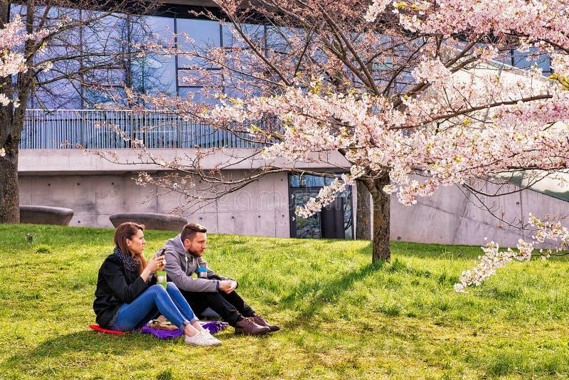 Couplez se reposer à la floraison de jardin de fleurs de cerisier ou de Sakura photos libres de droits